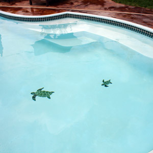 Turtles in the Pool